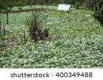 nan province thailand october 2 ... | Shutterstock . vector #400349488