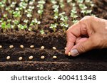 Farmer's hand planting seeds in ...