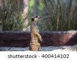 meerkat  | Shutterstock . vector #400414102