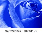 Close Up Beautiful Blue Rose...