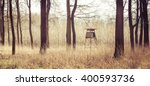 Panorama Of The Forest Hunting...