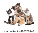 Stock photo funny group of two cats and one dog with heads turned into one side 400703962