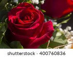 Close Up Of Fresh Red Rose Wit...