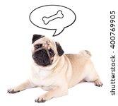 Funny Pug Dog Lying And...