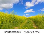 Yellow Field And Old Road Unde...