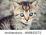 Lovely Kitty With Blue Eyes On...