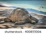 Seychelles Giant Turtle