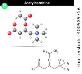 acetylcarnitine biological...