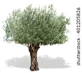 Olive Tree  On A White...