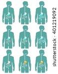 human digestive system  vector... | Shutterstock .eps vector #401219092