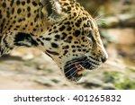Jaguar In Motion