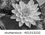 lotus in the pond picture in... | Shutterstock . vector #401313232