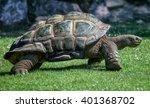 Stock photo big tortoise on grass 401368702