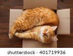 Ginger Cat Lies In Box On...