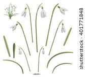 set of snowdrop flowers... | Shutterstock .eps vector #401771848