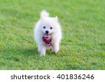 Stock photo dog walking in the grass 401836246