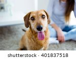 Stock photo portrait of beautiful young woman with dog playing at home 401837518