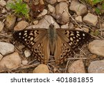 The Hackberry Emperor Is A...
