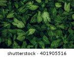 Green Leaf Texture. Leaf...
