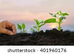 plant growing concept over... | Shutterstock . vector #401960176