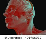 anatomy head muscles and brain. ... | Shutterstock . vector #401966032