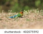 red throated bee eater by the... | Shutterstock . vector #402075592