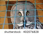 owl in a cage portrait | Shutterstock . vector #402076828