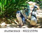 little blue penguins walking in ... | Shutterstock . vector #402215596