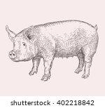 hand drawn pig | Shutterstock .eps vector #402218842