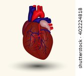 human heart sign or icon... | Shutterstock .eps vector #402224818