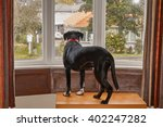 dog looking out of the window... | Shutterstock . vector #402247282