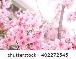 spring cherry blossom sakura ... | Shutterstock . vector #402272545