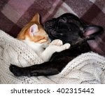 Stock photo white cat and black dog sleeping together under a knitted blanket friendship cats and dogs 402315442