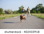 Stock photo nice staffordshire terrier dog running with big stick loving couple on roller skates in the 402433918