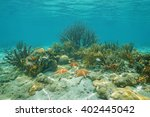 Corals And Cushion Starfishes...