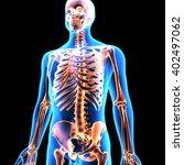 3d Illustration Of Human Body...