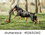 Running Rottweiler Dog