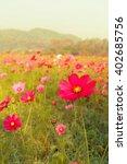 vintage pink cosmos flowers... | Shutterstock . vector #402685756