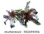 wild bitter herbs   Shutterstock . vector #402694456
