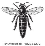 bee mother  vintage engraved... | Shutterstock .eps vector #402731272