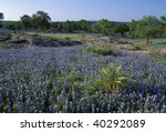 Meadow Covered With Lupine Als...