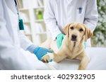 veterinary surgeon treating dog ...