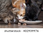 Stock photo  dog and two cats eating together animal feed snouts large dog french bulldog black cat large 402939976