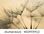 Abstract Dandelion Flower...