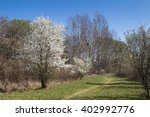 Meadow And A Blossoming Tree I...