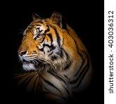 bengal tiger | Shutterstock . vector #403036312