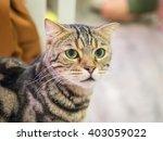 beautiful cat  | Shutterstock . vector #403059022