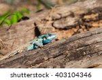 gila | Shutterstock . vector #403104346