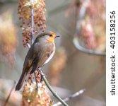 european robin  erithacus... | Shutterstock . vector #403158256