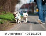 Stock photo city dogs 403161805